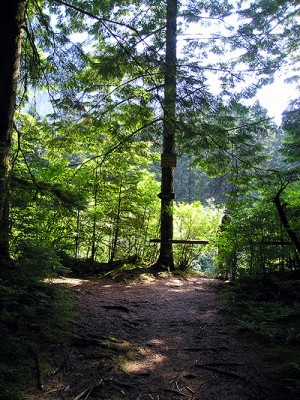 The hiking trail near Widgeon Creek