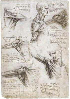 "leonardo da vinci: renaissance man essay Leonardo da vinci the renaissance was a transformational period in european history from roughly  ""vitruvian man"" combined leonardo's study of art, science."