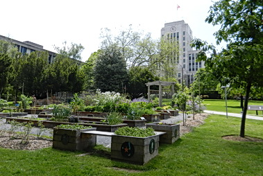 Community gardens nestled on front lawn of City Hall. Vancouver BC 2011. Photo by HJEH Becker