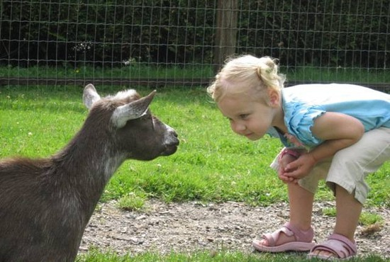 maplewood farm a farm petting zoo for kids inside vancouver