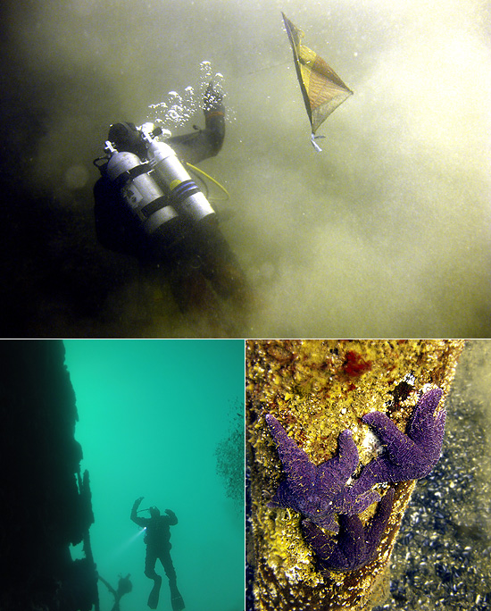 diving near vancouver