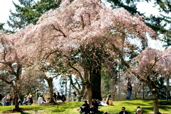 VanDusen's blossoms. Photo credit: Konstantin Egorov