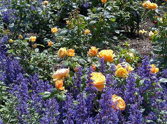 Photo credit: VanDusen Botanical Garden