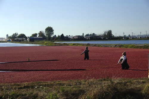 Richmond Cranberries