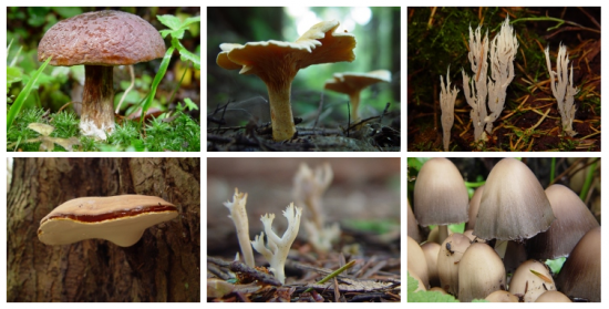 Stanley Park Fungi | Things To Do In Vancouver This Weekend