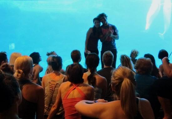 yoga vancouver aquarium