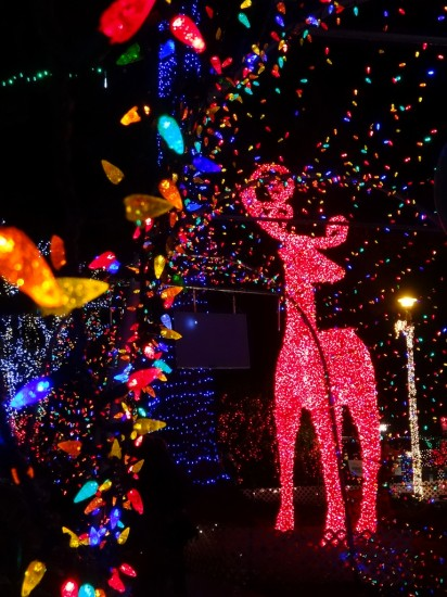Bright Nights Stanley Park | Things To Do In Vancouver This Weekend