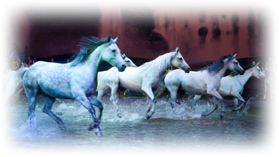 Odysseo by Cavalia | Things To Do In Vancouver This Weekend