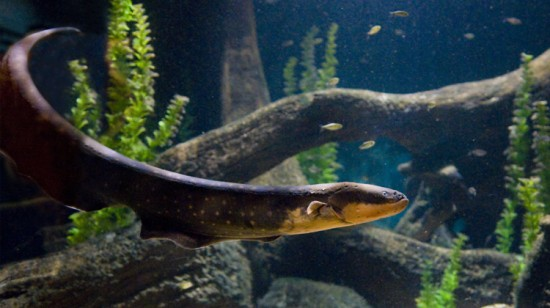 Electric Eels | Things To Do In Vancouver This Weekend