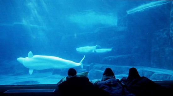 Vancouver Aquarium Sleepover | Things To Do In Vancouver This Weekend