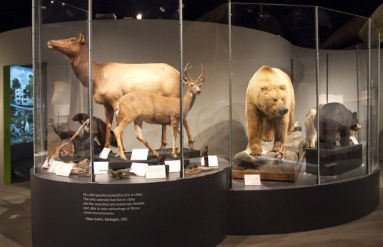 The Rewilding Vancouver exhibit looks at nature past, present and future. Photos courtesy Museum of Vancouver.