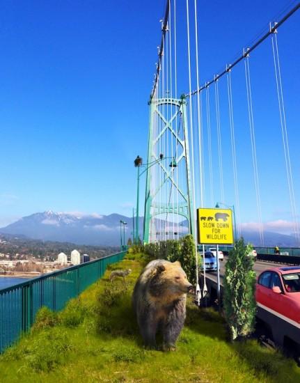 rewilding_Vancouver_lions gate wildlife corridor