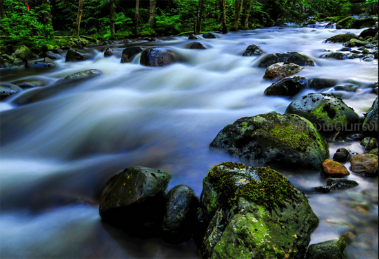 Lynn Valley Creek. Photo Credit: Arun Selvaraj via Flickr
