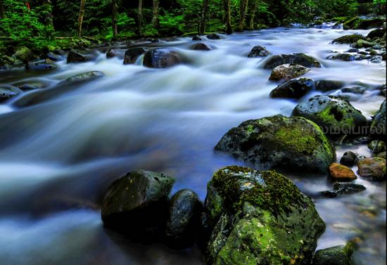 Lynn Valley Creek. Photo Credit: Arun Selvaraj via Flickr