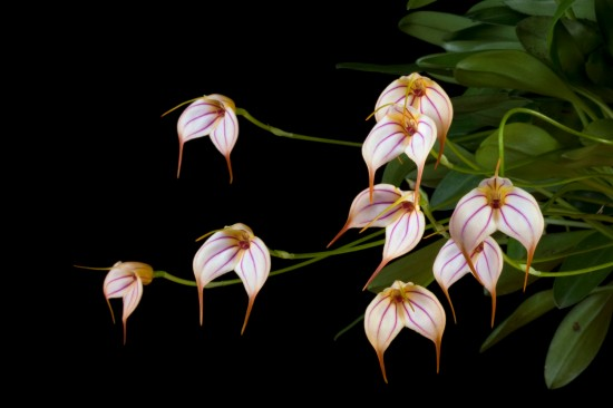Vancouver Orchid Society's Annual Show & Sale | Things To Do In Vancouver This Weekend