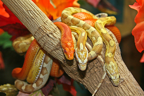 Exotic Reptile Show | Things To Do In Vancouver This Weekend