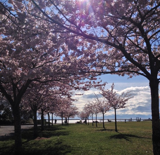 Cherry Blossoms - Vikki Leung | Things To Do In Vancouver This Weekend