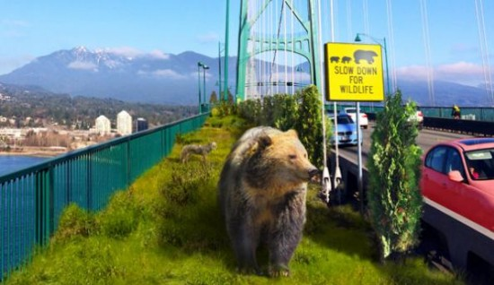 MOV - Rewilding Vancouver | Things To Do In Vancouver This Weekend