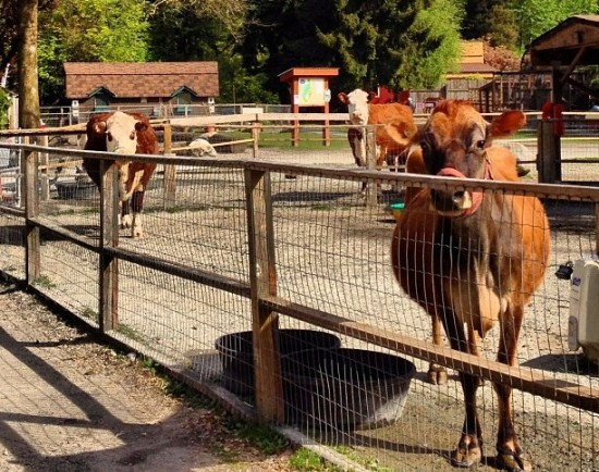 Maplewood Farm | Things To Do In Vancouver This Weekend