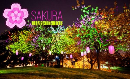 Vancouver Cherry Blossom Festival - Sakura Illumination | Things To Do In Vancouver This Weekend