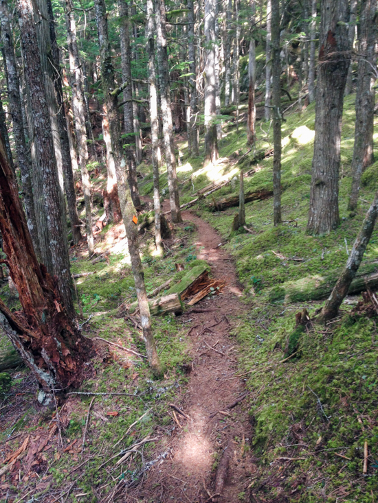 After the scenic viewpoint, the trail continues to ascend through thick, moss-covered forest.
