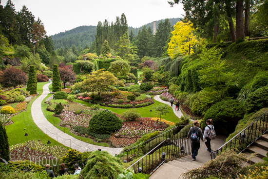 The gardens feature 55 acres of meticulously manicured grounds, including the spectacular Sunken Garden, built over an old quarry.