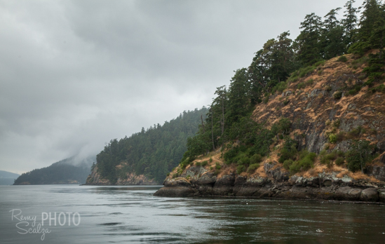 Active Pass, the narrow waterway between Mayne and Galiano Islands is a hotbed of wildlife.