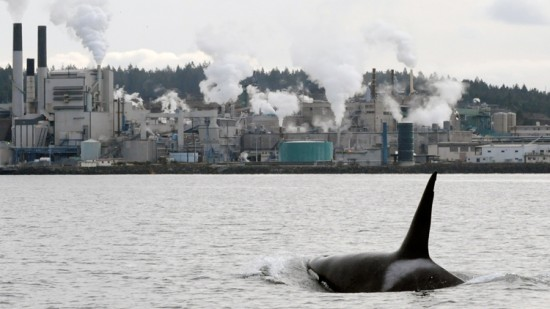 Protecting B.C.'s Marine Mammals From Land-based Pollution | Things To Do In Vancouver This Weekend