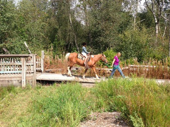 Ponies In The Park | Things To Do In Vancouver This Weekend