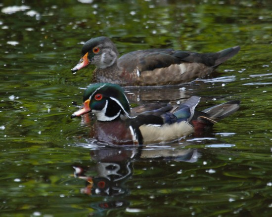 Stanley Park Young Naturalists - Quack Snacks | Things To Do In Vancouver This Weekend
