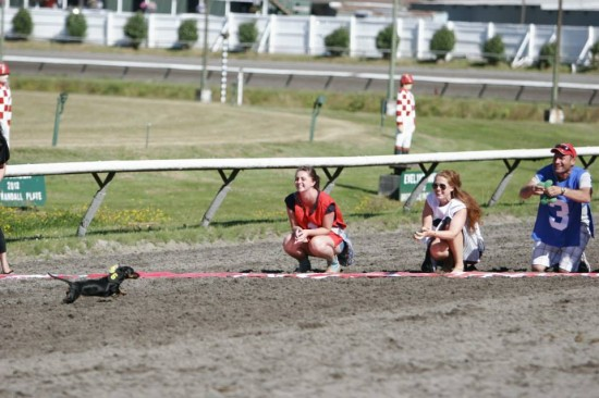 wiener dog race vancouver 2014