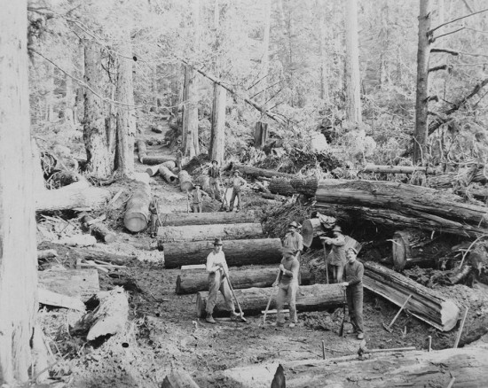 Logging Stanley Park - A Historical Walk | Things To Do In Vancouver This Weekend