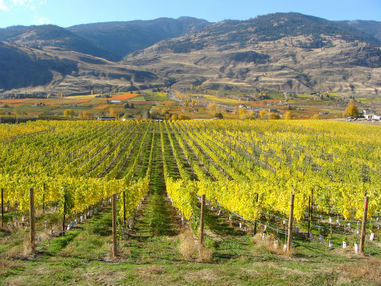 A vineyard in the Southern Okanagan. Photo courtesy of Oliver Osoyoos Wine Country.