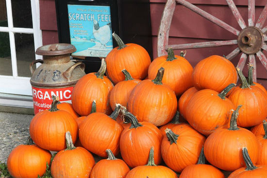 Pumpkins at the Mount Pleasant Farmers Market | Facebook photo.