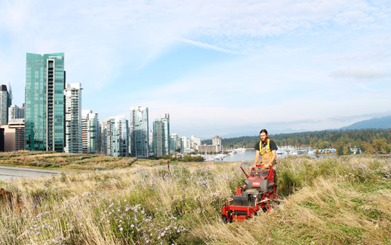 photo: The VCC's living roof gets a haircut.