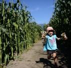 Corn maze vancouver 2014