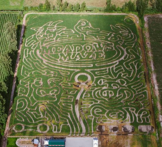 Meadows Maze Vancouver Corn Maze