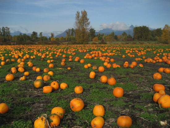 Laity Pumpkin Patch || Photo Credit: Flickr/Amber Strocel