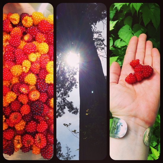 Urban berry foraging || Photo credit: Miranda Post