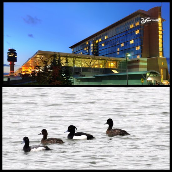 The Fairmont Vancouver Airport goes to the birds with their new 'Room & Bird' packages.