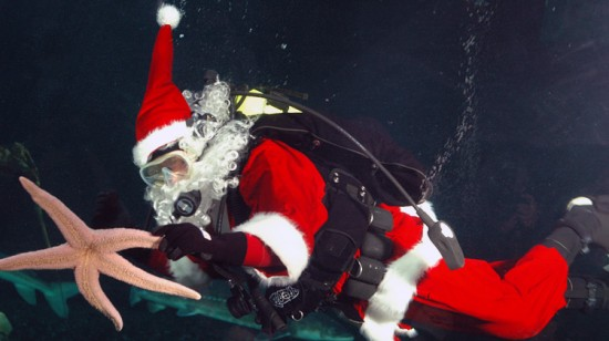 Holidays At The Vancouver Aquarium | Things To Do In Vancouver This Weekend