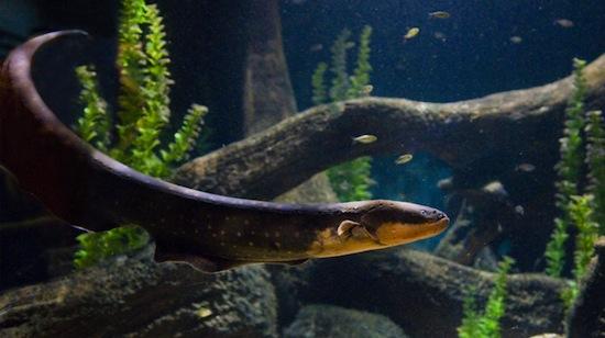 Photo from Vancouver Aquarium