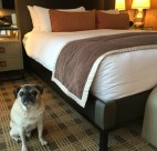 Pet-Friendly Hotels in Vancouver