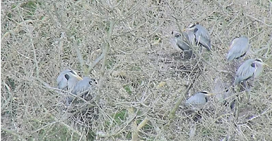 Screenshot from the Heron Cam