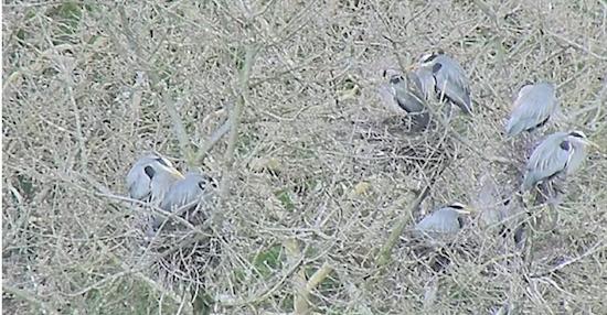 Screenshot from the Heron Cam