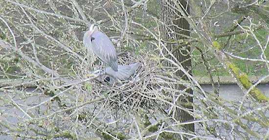 Screenshots from the Heron Cam