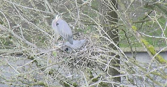 Screenshots from the Heron Cam