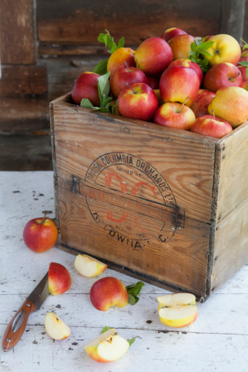 Photo from Left Field Cider Co. website