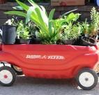 Van Dusen Plant Sale 2015