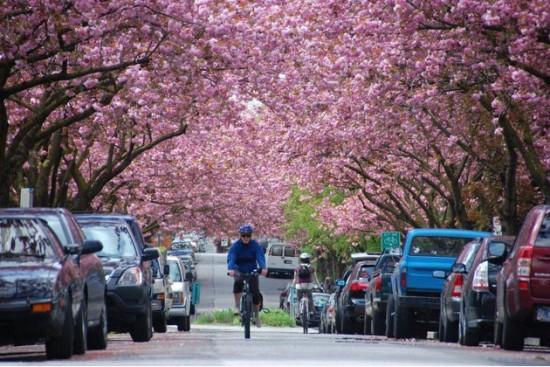 Bike the Blossoms - photo credit: Joseph Lin
